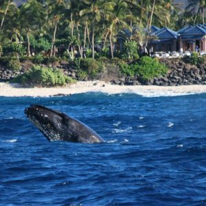 Whale Watching Cruise To The Best Locations